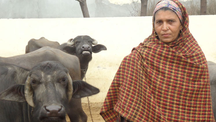 Village women dairy development